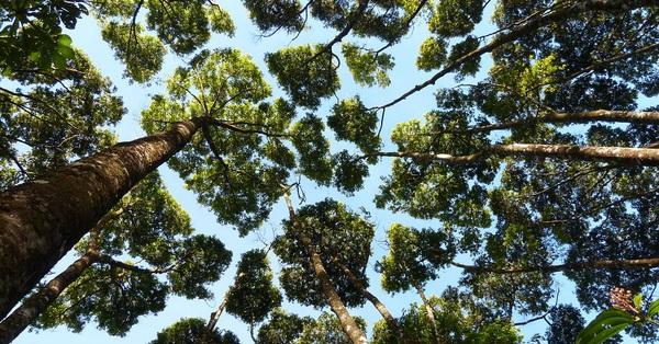 Hiện tượng lạ khiến một số loài cây không bao giờ