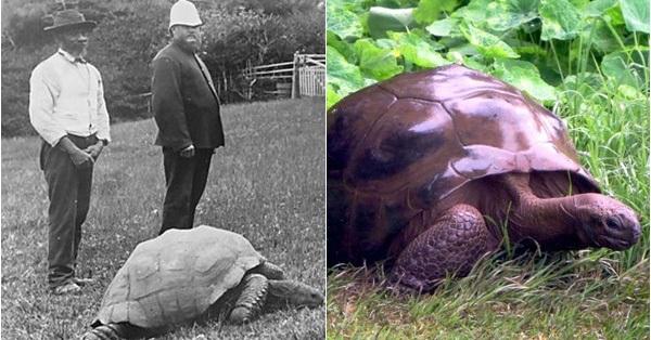 Cụ rùa khổng lồ sống qua 3 thế kỷ, chứng kiến nhiều sự kiện quan trọng của thế giới và đến giờ vẫn ung dung hưởng thái bình
