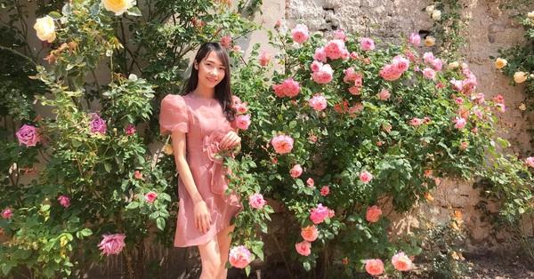 Giàn hoa hồng trước sân nhà với cả nghìn bông rực rỡ trong nắng của chồng chăm chút sớm khuya để