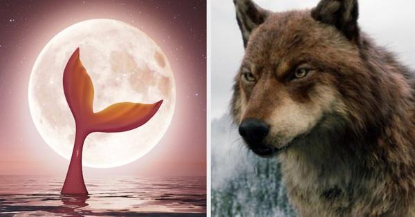 Trắc nghiệm vui: Bạn là ma sói, ma cà rồng, nàng tiên hay là một mỹ nhân ngư?