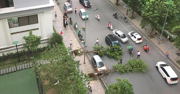 Hà Nội: Cây xanh bật gốc đè trúng ô tô đang chạy trên đường giữa cơn mưa giông bất chợt