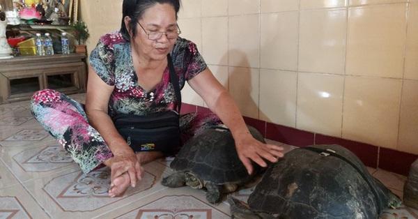 ''Kỳ lạ'' cụ rùa hơn trăm tuổi ở miền Tây biết... nghe kinh, ăn chay và giữ cửa