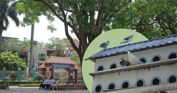 Có 1 ngôi trường xanh mướt như resort nằm giữa trung tâm TP Cảng, nơi thầy trò cùng nhau nâng niu từng gốc cây, tán lá như 1 phần máu thịt