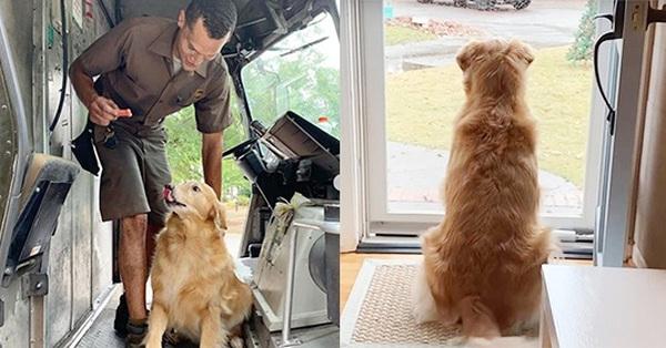 Nàng chó cảm nắng anh đưa thư: Ngồi trước cửa tương tư, thấy bóng