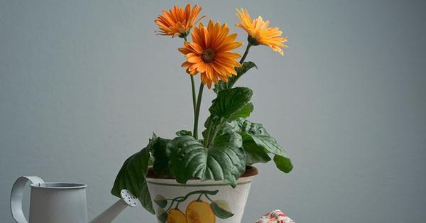 4 loại cây cảnh trồng vừa làm đẹp nhà vừa có thể giảm...