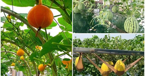 Ngắm khu vườn đủ loại rau quả rộng hơn 100m² trên mái nhà với 100 triệu đồng đầu tư thiết kế của gia đình ở Hà Nội