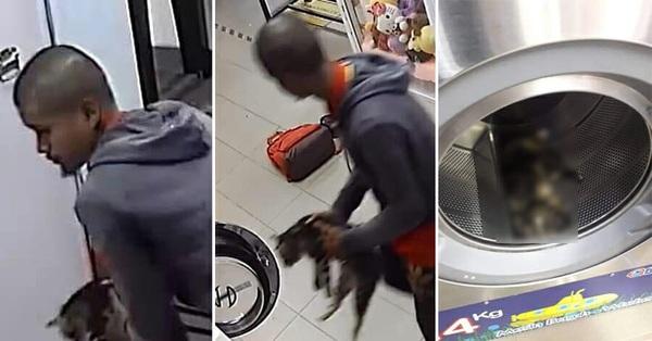Nhốt 3 con mèo vào lồng máy giặt đến chết, người đàn ông đối mặt với án tù 3 năm