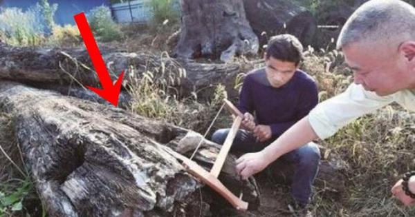 Mang khúc gỗ xấu xí về vứt ở góc vườn, 5 năm sau người...