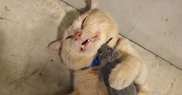 Ai nuôi mèo cũng nuôi thêm hi vọng boss sẽ chăm chỉ bắt chuột, nhưng nhìn hình ảnh này thì hội