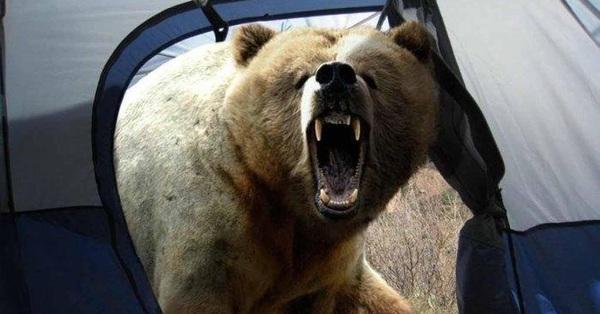 Nhiếp ảnh gia nổi tiếng bị gấu tấn công đến chết và bức ảnh chụp