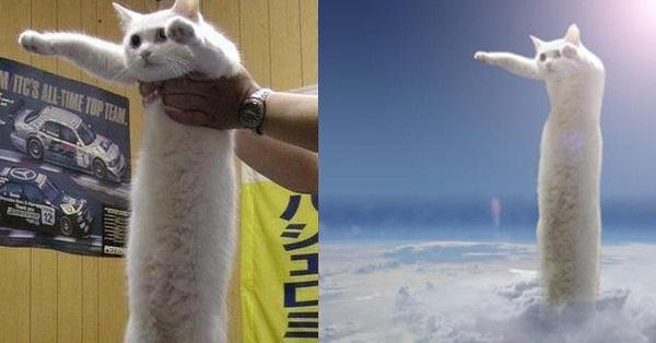 Nobiko - chú mèo huyền thoại Internet với bức ảnh meme...