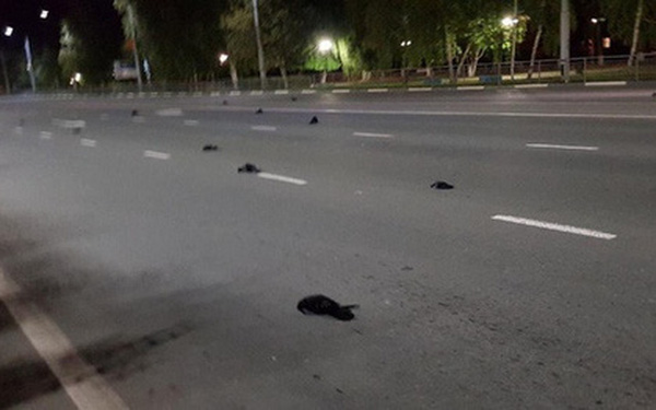 Nga: Xác chim rơi ở thành phố có nhà máy điện hạt nhân
