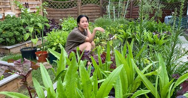 Ngôi nhà giữa đô thị náo nhiệt vẫn an yên, thư thái nhờ khu vườn phủ đầy rau sạch và hoa tươi của mẹ Việt