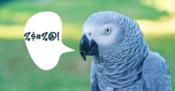 5 con vẹt láo lếu bị vườn thú
