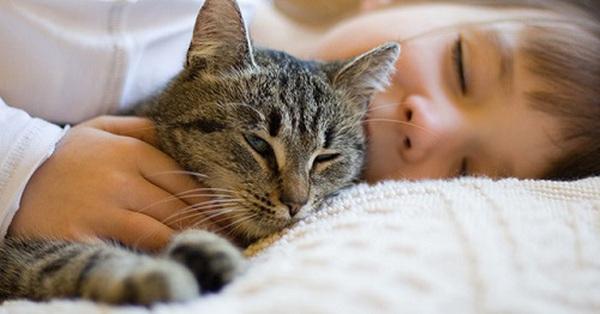 """Tranh cãi dữ dội về clip mèo ngủ cạnh bé sơ sinh nhưng cư dân mạng vẫn khẳng định bị """"đốn tim"""" vì chi tiết đáng yêu này"""