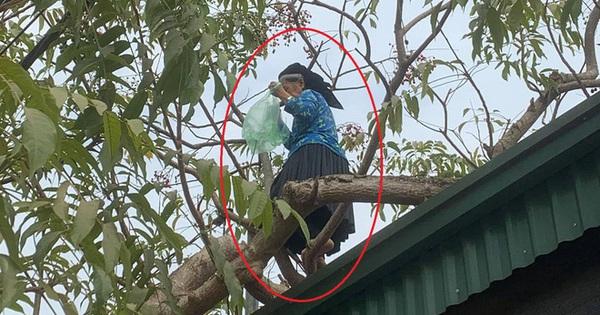 """Cụ bà U70 trèo cây hái quả thoăn thoắt, ai nhìn qua cũng phải ngả mũ: """"Gái 18 cũng thua ngoại"""""""