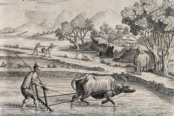 Con trâu: Vật tổ trong thế giới cổ đại