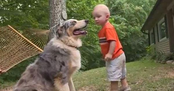 Chó cưng phóng tới như muốn ăn tươi nuốt sống bé trai đang chơi ngoài sân, tích tắc sau thảm kịch ập đến khiến gia đình đứa trẻ biết ơn con vật suốt đời