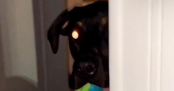 Đều đặn mỗi ngày, chú chó cưng khiến chủ nhân khóc thét vì hành động như kẻ rình rập với đôi mắt đáng sợ cùng những