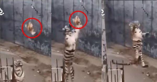 Đi chơi vườn thú mà thản nhiên đem gà sống để