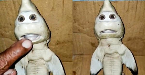 Cá mập mang thai mắc lưới, ngư dân sững sờ khi nhìn thấy cảnh tượng trong bụng con vật còn dân mạng nghĩ ngay đến