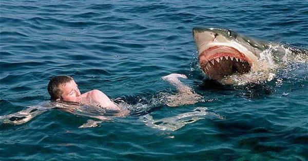 Đang lướt sóng thì bị cá mập truy sát, chàng bác sĩ nhớ lại video xem trên Youtube và làm theo, nào ngờ thoát khỏi Tử thần thật!