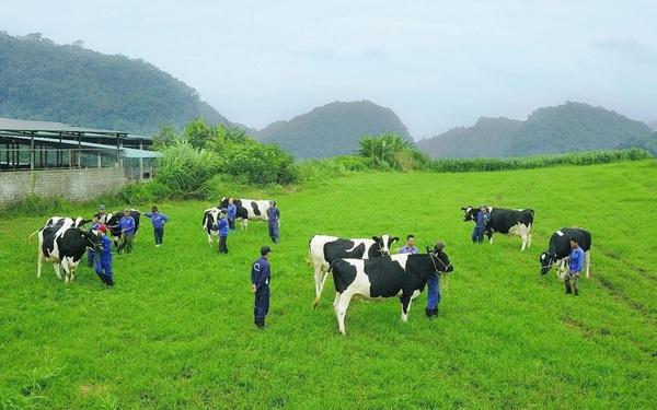 """Thiên nhiên đã ưu ái mảnh đất """"thiên đường bò sữa"""" Mộc Châu ra sao?"""