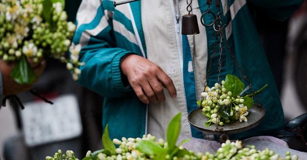Vào mùa hoa bưởi thơm ngào ngạt, giá từ 200.000/kg và cách lựa hoa