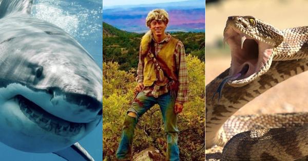 Tỷ lệ bị rắn độc, cá mập và gấu dữ tấn công là 1/893,35...