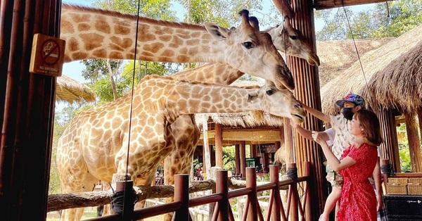 Mẹ Hà Nội kể hành trình đưa 2 con đi chơi tại Safari Phú Quốc, kết luận đúng một câu