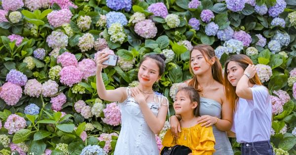 """Vườn hoa cẩm tú cầu """"siêu to khổng lồ"""" ở Sầm Sơn hút hàng nghìn người tìm tới chụp ảnh vào cuối tuần, dù chưa Tết nhưng vẫn được chiêm ngưỡng pháo hoa bắn ngợp trời"""