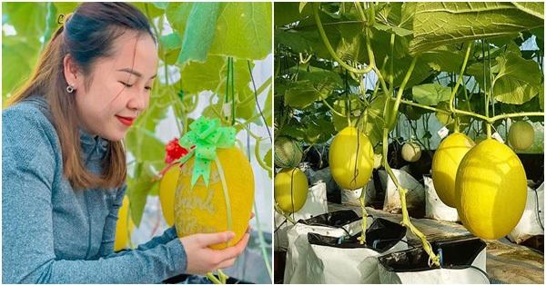 Người phụ nữ Kiên Giang đầu tư 10 triệu đồng thiết kế nhà màng 30m² trồng dưa lưới vì đam mê