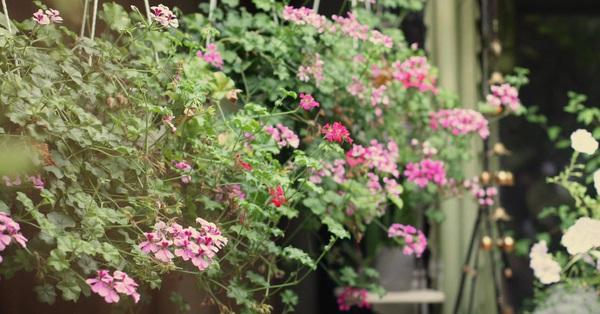 Bí quyết giúp khu vườn tốt tươi, rực rỡ sắc hoa quanh năm của mẹ đảm ở Sài Gòn