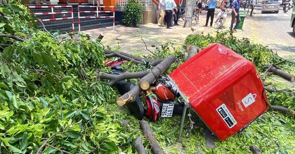 Nhánh cây cổ thụ bất ngờ gãy, rơi trúng người đi đường