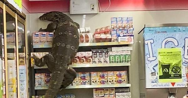Vào cửa hàng tạp hóa mua đồ, khách la hét hoảng sợ khi chứng kiến cảnh tượng rùng rợn ngỡ