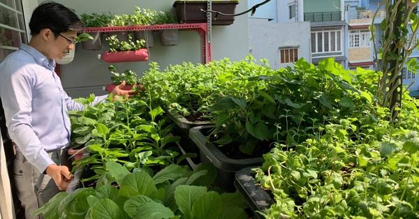 Ban công 3m² phủ kín rau sạch của ông bố 3 con ở Bình Thạnh, Sài Gòn
