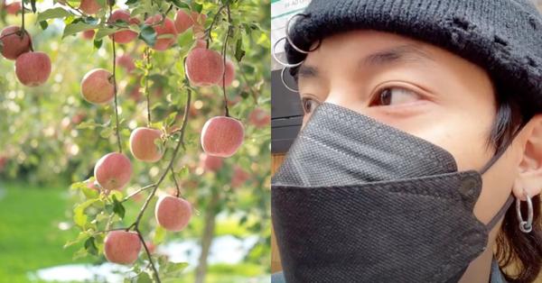 """Bất ngờ vì người Nhật không ăn trái cây trồng trong vườn nhà dù nó chín mọng, hot Tiktoker chia sẻ phê phán một số bạn trẻ Việt """"tham lam và ngu dốt"""" gây phẫn nộ"""