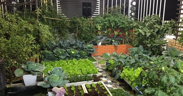Mong muốn vợ con được ăn thực phẩm sạch, ông bố trẻ vất vả phủ kín rau sạch trên sân thượng 70m² ở Hoàng Mai, Hà Nội