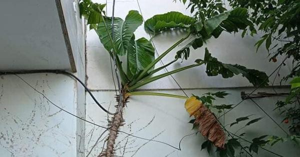 Thích trồng cây kiểng, thanh niên không ngờ mua phải giống