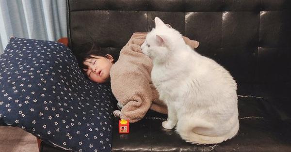 Em bé ngủ quên khi đang chơi, thái độ kiên nhẫn và ấm áp của thú cưng khiến ai nấy lịm tim