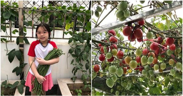 Vườn rau quả sạch 100m² trên mái nhà của mẹ 3 con ở Hà Nội