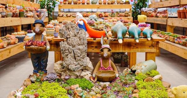 Khu vườn có hơn 100 loài sen đá rực rỡ trên sân thượng của vợ chồng trẻ Hải Phòng
