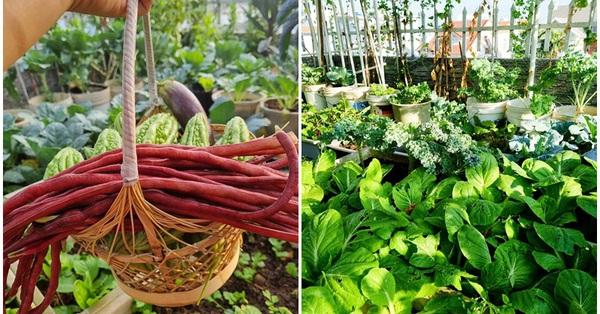 """Mẹ đảm ở Sài Gòn trồng bạt ngàn su hào, bắp cải trên sân thượng, không khác gì một """"trang trại"""" thu nhỏ"""