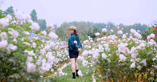 Cuộc sống an yên trong ngôi nhà có vườn hoa hồng quanh năm tỏa hương sắc của gia đình 3 thế hệ ở Ba Vì, Hà Nội