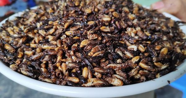 Từ vụ ăn mối có nguy cơ sốc phản vệ: Làm sao để phòng tránh nguy cơ ngộ độc, sốc phản vệ do ăn ấu trùng, côn trùng?