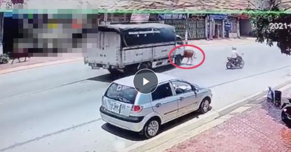 """Cắm đầu chạy thục mạng sang đường gây tai nạn cho xe tải, biết được danh tính """"đối tượng"""" tài xế chỉ biết lắc đầu ngao ngán"""