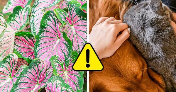 7 loại cây cảnh dù đẹp đến mấy cũng không nên trồng trong nhà vì gây nguy hiểm