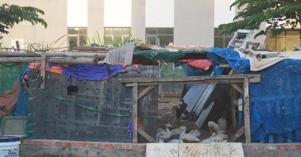 Trong khi nhà Hà Nội vẫn là giấc mơ của nhiều người, có chung cư đã hoàn thiện hàng chục năm lại bỏ hoang không ai ở, sân chơi làm chỗ nuôi vịt