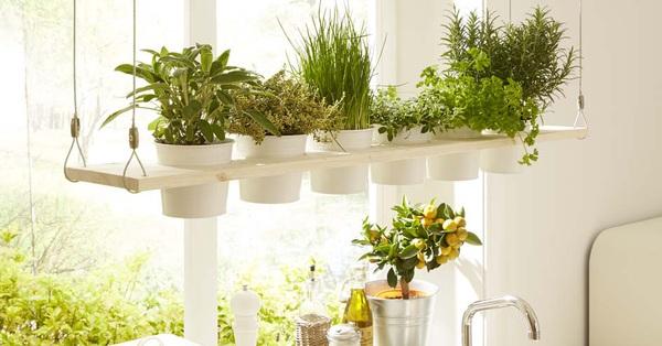 3 bí quyết cực hay giúp bạn nhanh chóng tạo khu vườn gia vị bên cửa sổ