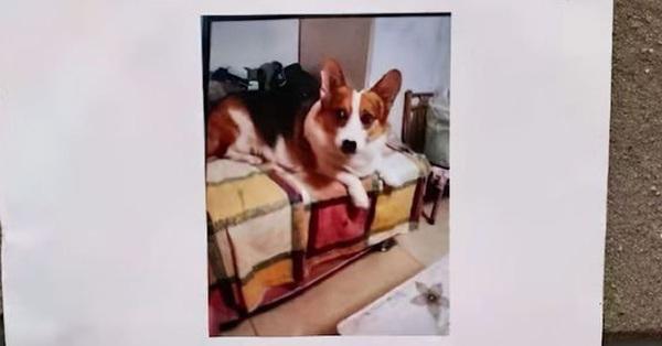 Chó cưng mất tích, chủ nhân chịu chơi treo thưởng cả căn nhà, dân tình nháo nhào tìm chó để rồi vỡ mộng